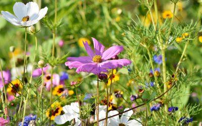 flower-meadow-3598552_1920