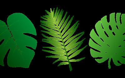 leaves-2305515_1280